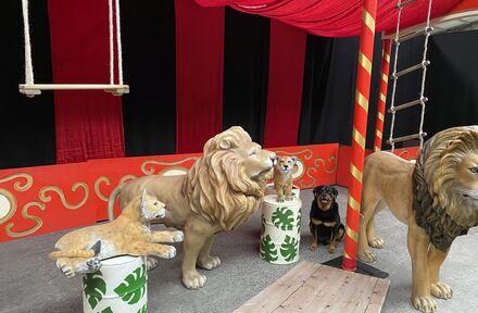 Daguitstap naar het circus - Foto 1